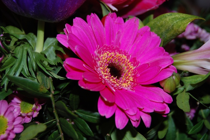 Gerbera daisy! My favorite!