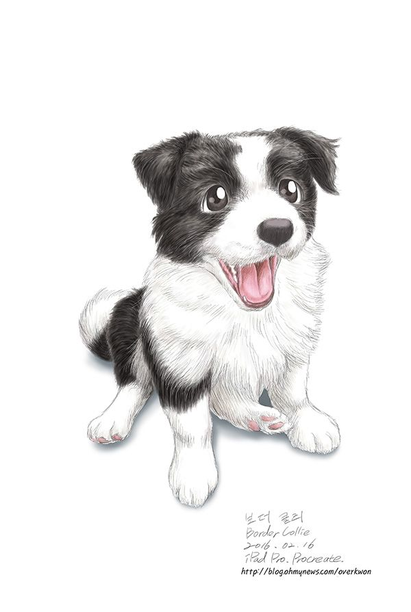 http://blog.ohmynews.com/overkwon/539108  보더 콜리 개 강아지 오버권 Border Collie  dog  puppy