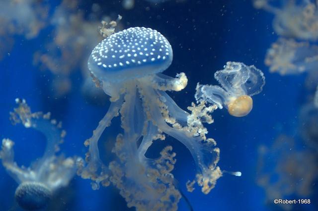 I adore jellyfish!: