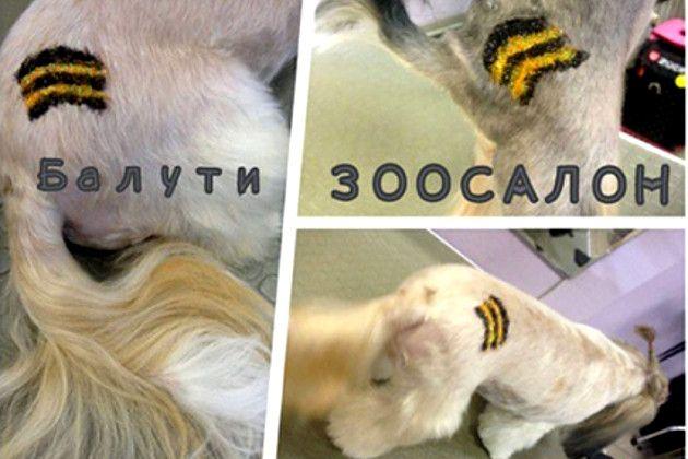 В Москве собакам делают »колорадские» тату