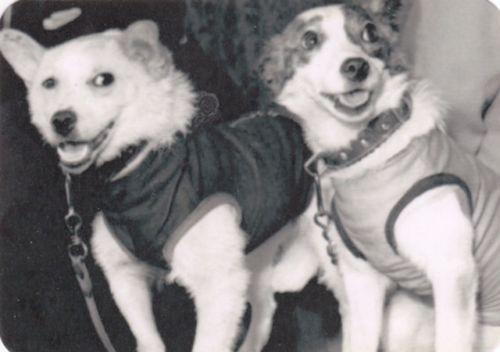 astronaut-dog-Layka-Laika-Belka-Strelka-dog-in-space-FIRST-USSR-Pocket-Calendar