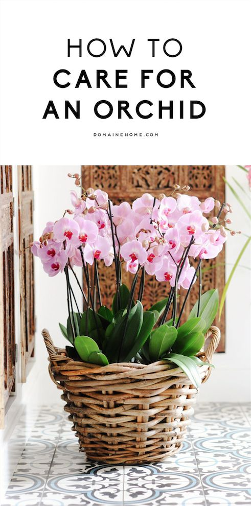 Best 25 orchids garden ideas on pinterest orchid in vase orquids care and how to plant orchids - How to care for potted orchids ...