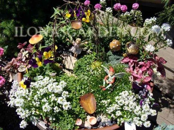 Pin by kia paschke on garden ideas pinterest Fairy garden plants