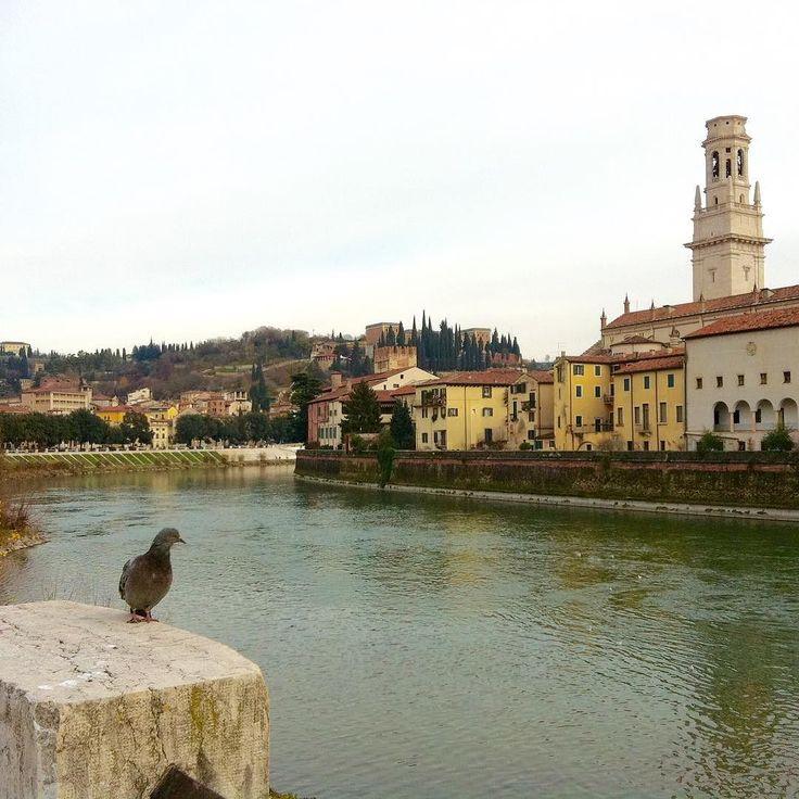 Bisa jadi keindahan kota Verona dari tepi Sungai Adige ini menjadi inspirasi Shakespeare saat menulis Romeo dan Juliet. #ipad2pics #moniquerijkersindonesia #rivers #verona by monique_rijkers