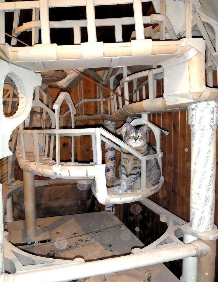carton prototype - cat castle - cat tower - cat tree - playzone for cats - www.domusfelis.com