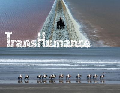 TransHumance est un dispositif poétique qui existera par l'engagement de tous ceux qui s'en empareront. C'est une aventure à partager, une œuvre à réaliser ensemble. Comment ? D'abord venez marcher au rythme des animaux, pour faire 100 mètres ou 100 kilomètres.