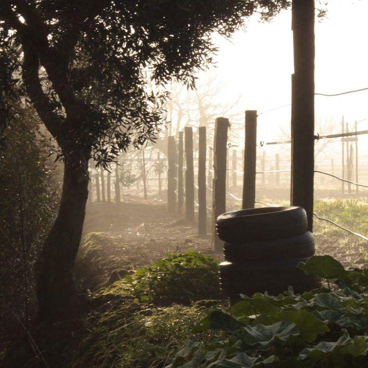 Capturing the morning mist in Portugal. Location: Quinta dos Pinheiros, Santarém, by Helene Føllesdal, winter 2016.