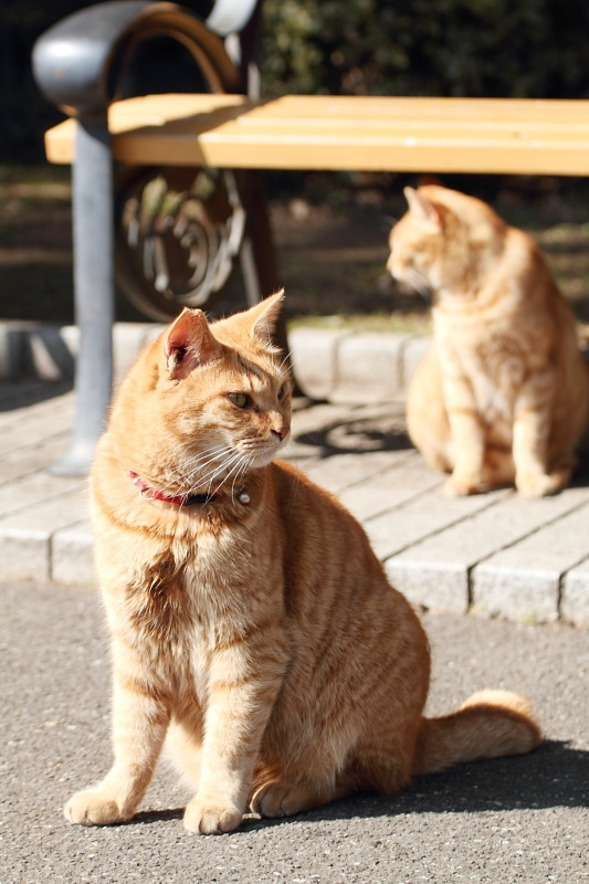 いつの日か東京日比谷公園で出会った猫たち。
