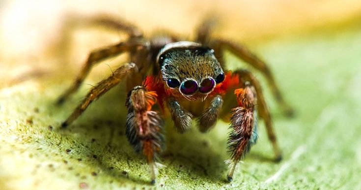 Scientists find 50 exciting new spider species, and arachnophobes will be thrilled