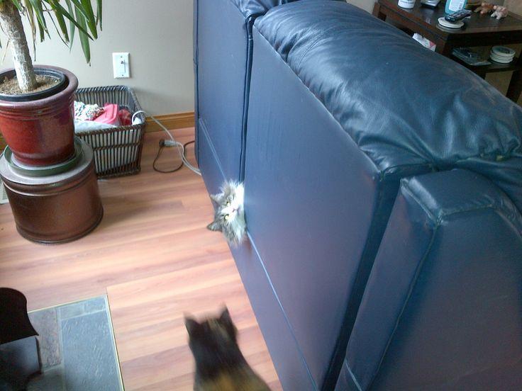 This Isn't My Cat