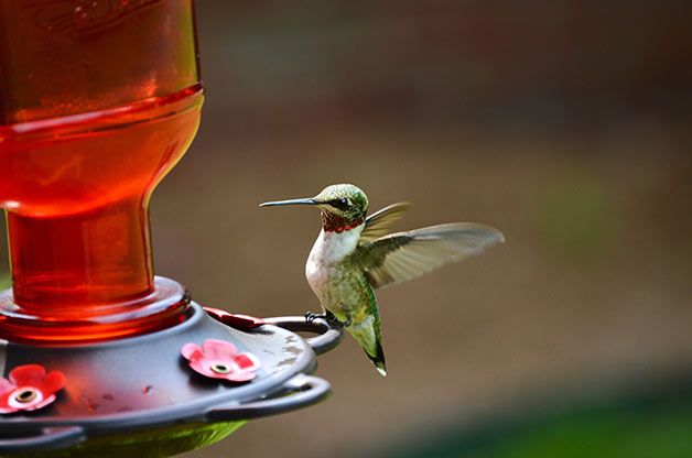 Make this the year you attract hummingbirds (or increase their traffic) in your yard.
