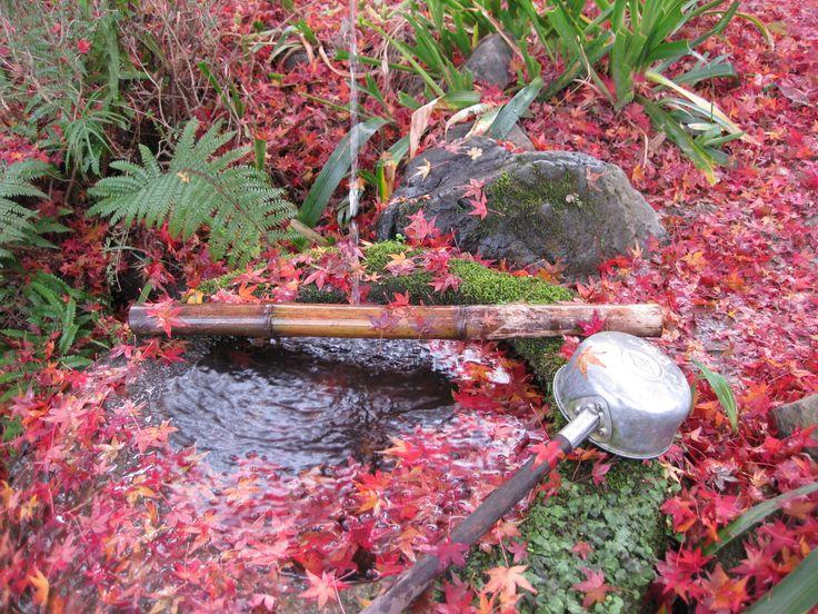 水面に浮かぶ紅葉。
