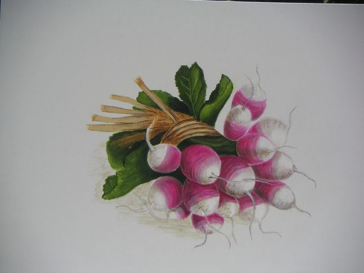 radis - Photo de peintures sur toile de lin - reflets argent