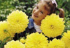 Dahlia Flower Bulbs For Sale | Huge Selection of Dahlia Bulbs