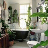 そこにあるだけで癒される。観葉植物と共存する部屋作り