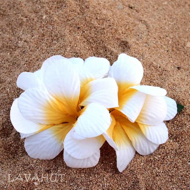 Plumeria White Hawaiian Flower Hair Clip
