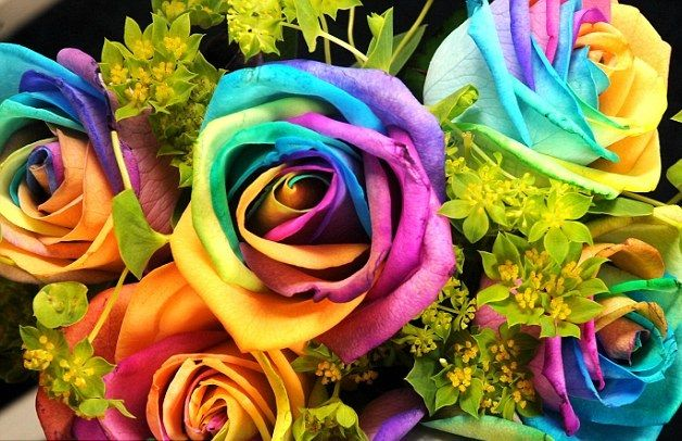 rainbow flowers for valentines day