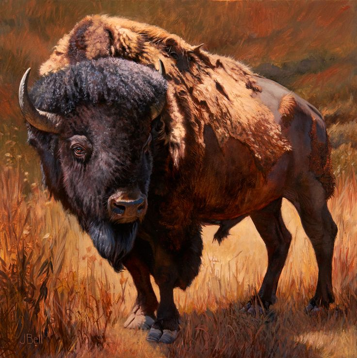 Bison Bull by Julie Bell | Bison Wildlife Painting | Prints Available