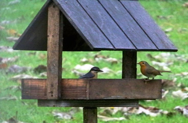 Nourrir les oiseaux en hiver. - Le blog de l'AANE