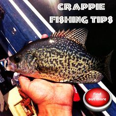 Crappie fishing tips #crappie #fishing #tips                                                                                                                                                                                 More