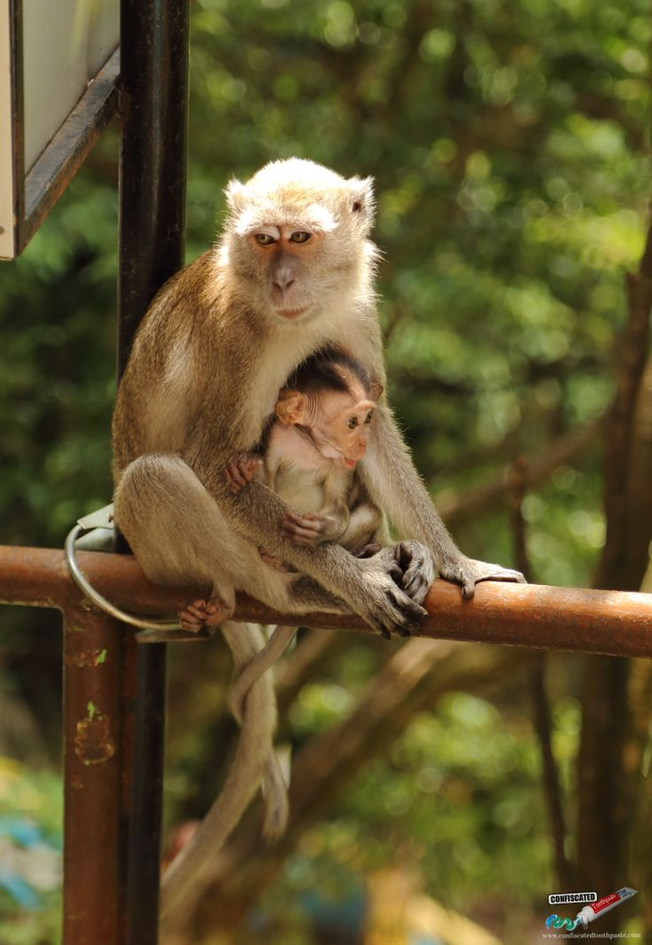 Cute monkeys at Batu Caves...  2 Days in Kuala Lumpur --> http://www.confiscatedtoothpaste.com/2-days-in-kuala-lumpur/