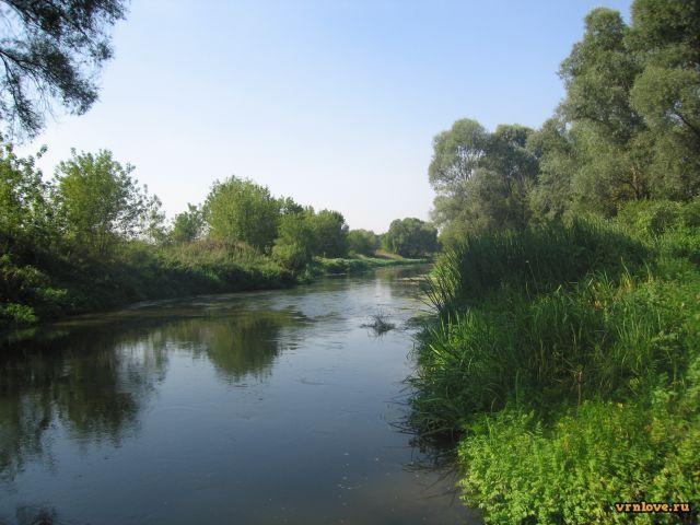 Река Тихая Сосна Воронежской области