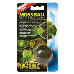 17 best images about betta fish ideas on pinterest live for Betta fish moss ball