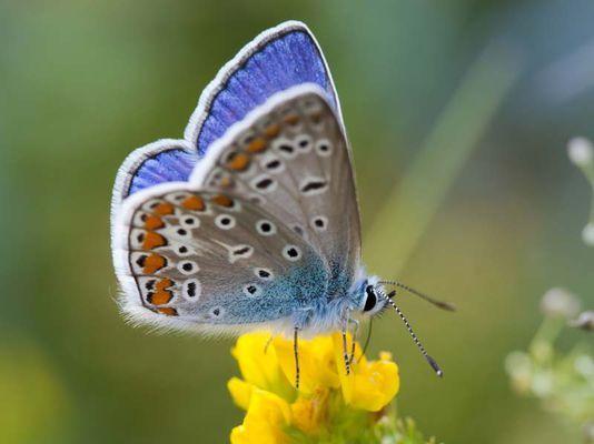 Schmetterlinge beobachten – Natur entdecken – Bund für Umwelt und Naturschutz Deutschland (BUND)