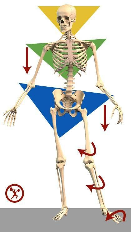 141 best Health images on Pinterest | Physiotherapie, Anatomie und ...