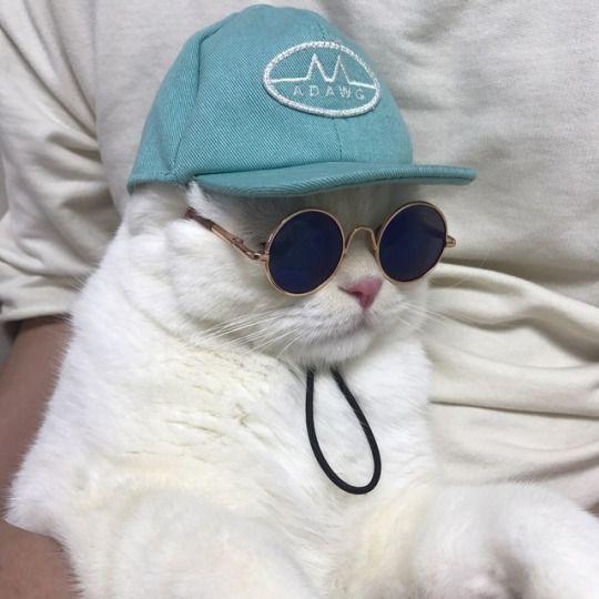 Download 61+  Gambar Kucing Gaul Terbaru Gratis