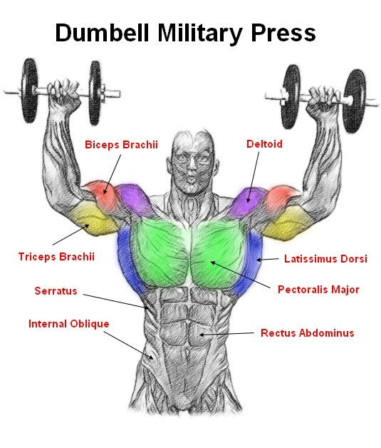 Dumbell Military Press The dumbell military press is a ... Overhead Press Muscles Worked