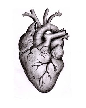Anatomical Heart by Claire Dempsey. Prints available. #heart #anatomy #biology