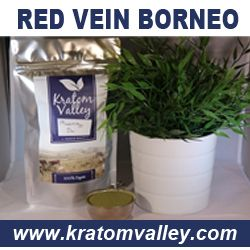 Harvested from only the most mature leaves, our Maeng Da kratom is then finely ground to the consistency of powder sugar for maximum absorption. Read more... http://www.kratomvalley.com/product-p/maeng-da.htm
