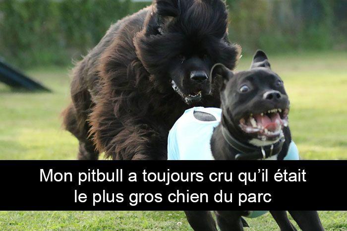 Les 651 meilleures images du tableau Humour-France sur