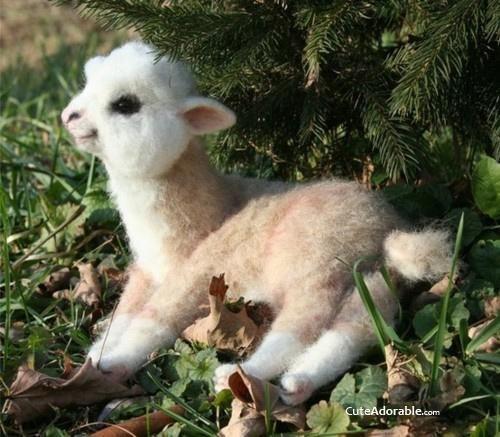 Ai, uma lhama bebê! Não sabia que elas eram de pelúcia quando nasciam!