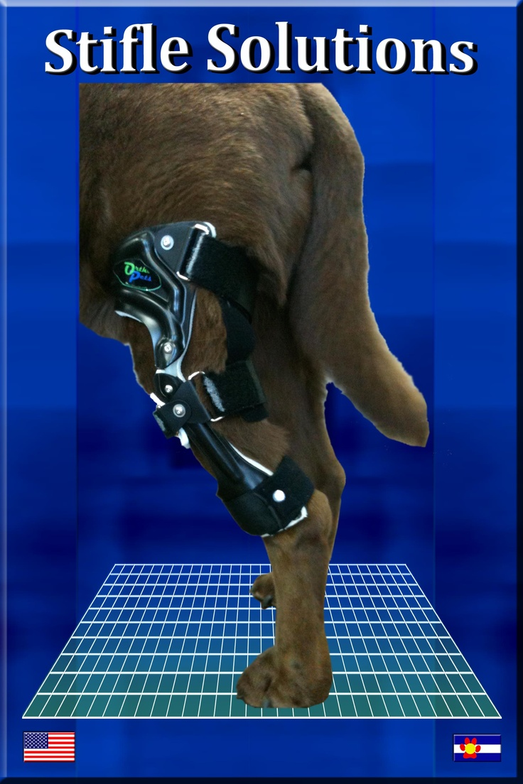 Dog Knee Brace Custom ACL Brace for Your Dog Dogs