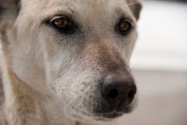 How To Keep Biting Flies Off My Dogs Ears