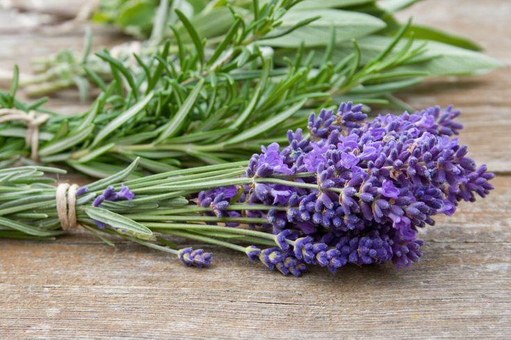 5 plantas que funcionam como repelentes naturais