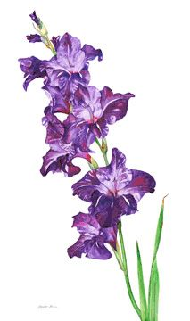 watercolor painting of gladiolus | MARIKO IRIE FINE ART: Purple Gladiolus