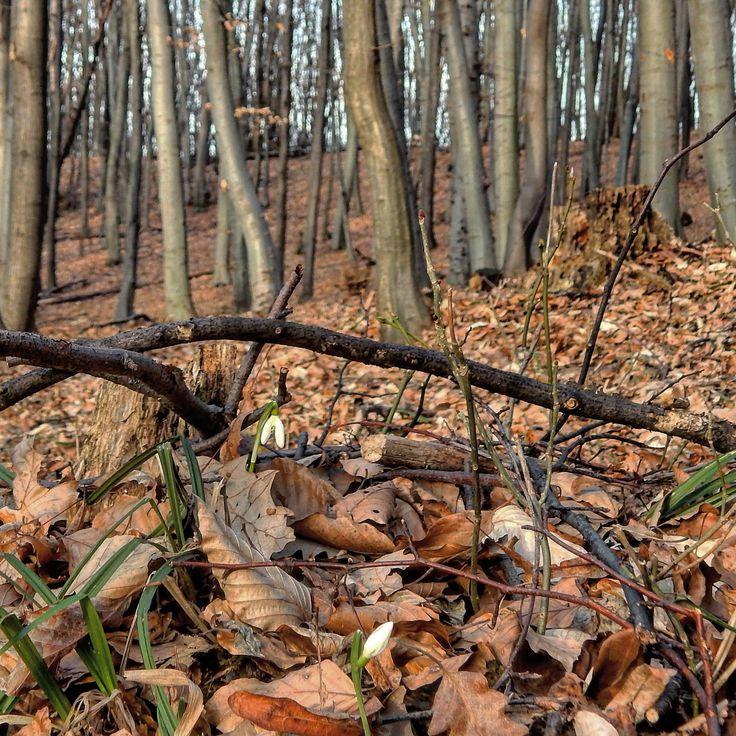 Almádi Ildikó Az ébredező természet A kép a Vértesben készült. Több kép Ildikótól: www.facebook.com/ildiko.almadi
