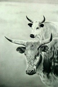 NGUNI CATTLE (Charcoal)