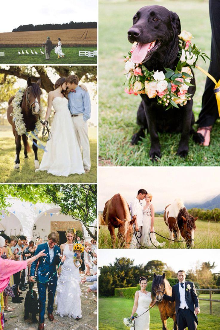 Pets at wedding