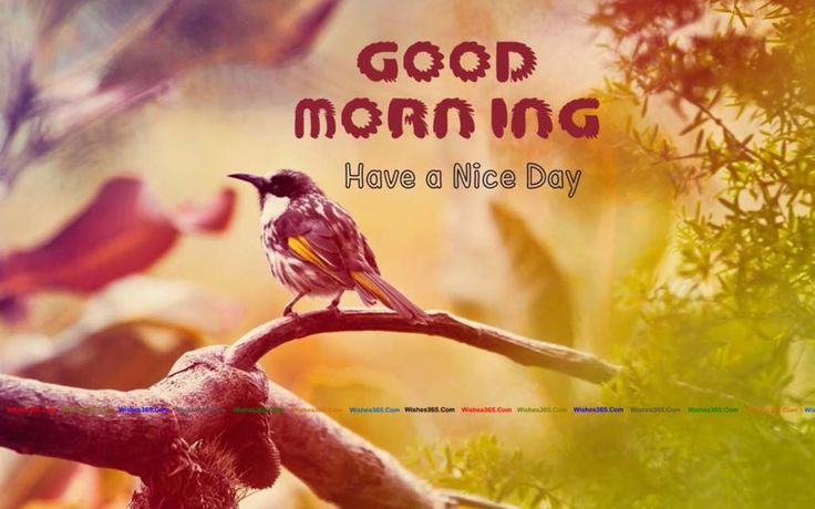 Best 20 Romantic Good Morning Quotes Ideas On Pinterest: 25+ Best Ideas About Good Morning Wishes On Pinterest