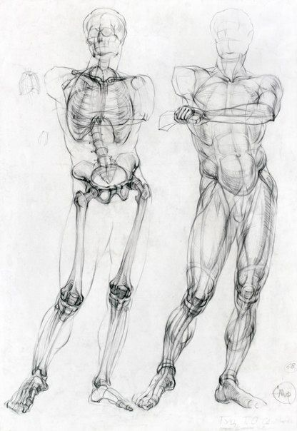 Musculoskeletal drawing