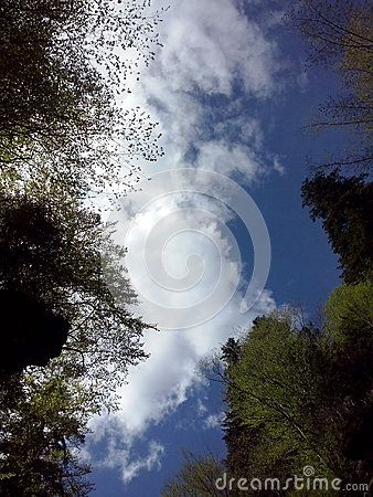 Almost clear sky, with a few clouds, between trees, at Casoca, Buzau
