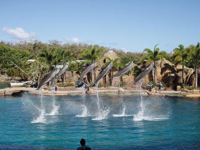 Dolphin show at Seaworld on the Gold Coast, Australia