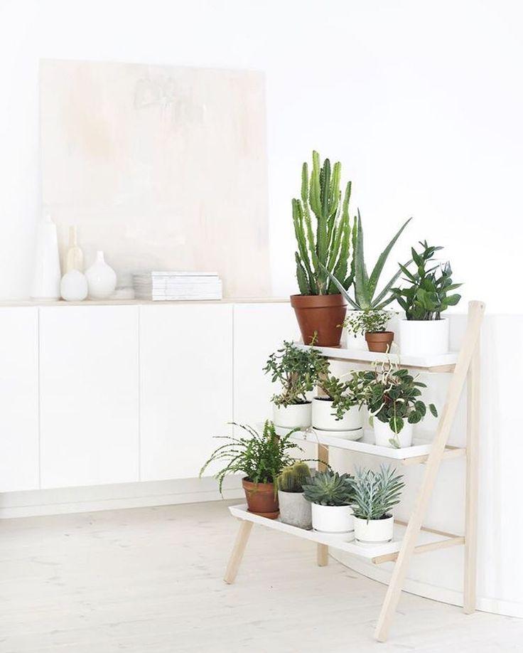 "Scandinavian Interior Inspo on Instagram: ""Some indoor garden inspiration from @weekdaycarnival   #indoorplants #indoorplant #planter #garden #plantstand #interiordecor #indoorgarden #succulents #indoorgardening #cacti"""