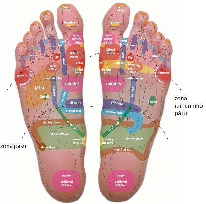 Vedeli ste, že na chodidlách je celá mapa vnútorných orgánov? Masážou chodidiel môžte priaznivo ovplyvniť zdravotný stav. Táto terapia sa nazýva reflexná masáž chodidiel .. a je veľmi príjemná:)