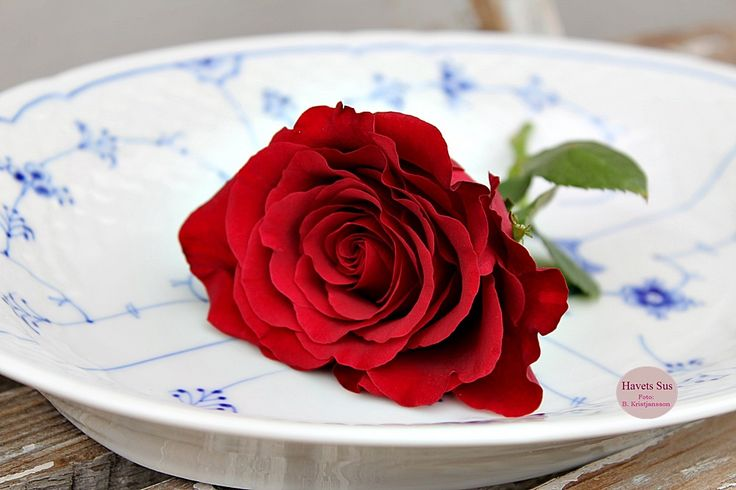 Bing & Grøndahl - Rose - Red - Flowers - Havets Sus