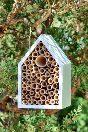 Insect House- Keep solitary insects safe e.g. Blue-banded bee